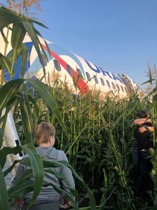 15日、モスクワ郊外でトウモロコシ畑に緊急着陸した、ウラル航空の旅客機と避難する乗客ら=タス共同
