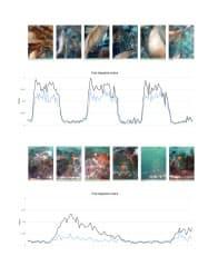 魚の食欲を機械学習を生かして判定する
