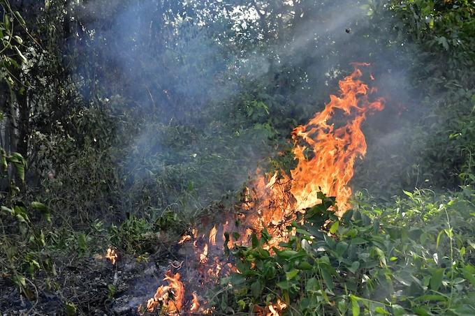 アマゾン 森林 火災 で 国際 社会 から 批判 され て いる の は