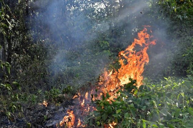 アマゾンでは違法伐採に伴う焼き畑農業で森林火災が急増している(北部パラ州)