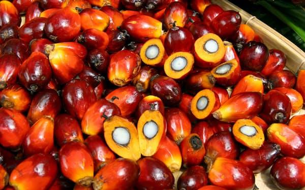 パーム油原料のアブラヤシは環境破壊や児童労働の問題が指摘される