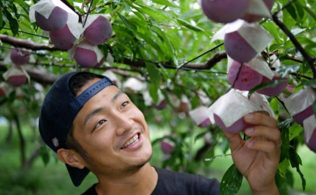 重さ世界一に向けて栽培技術を磨くとみやま農園の富山喜幸代表(新潟市)