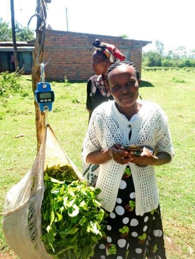 キャップアグリは茶葉の納入量をデジタル軽量計で計るIoT農業を進める(ケニア)