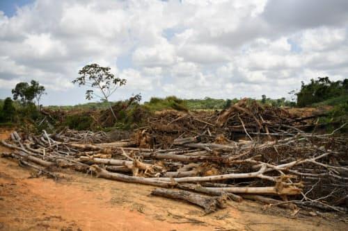 農地開発のため、伐採された木々が積まれていた(ブラジル北部パラ州)