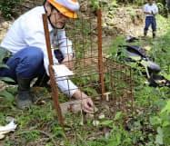 ノウサギ捕獲用の箱わなを設置する四国森林管理局の職員(高知県土佐町)=共同