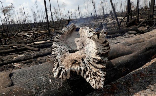 アマゾン熱帯雨林の火災に対するブラジル政府への批判が世界中で巻き起こっている=ロイター
