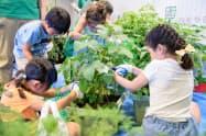 全国農業協同組合中央会(JA全中)が開催する「やさいの日」イベントのイメージ。野菜収穫のコーナーを設ける