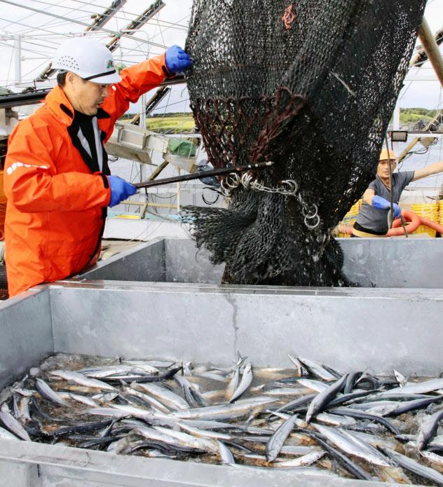 今年もサンマ漁は始まったが(根室市の花咲港、共同)