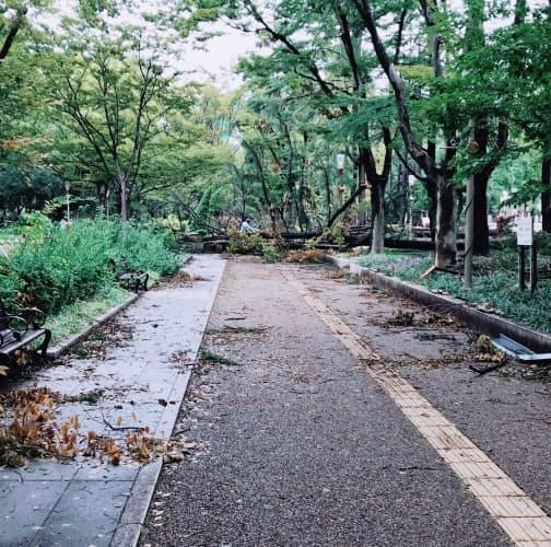 普段は親子連れやテニス愛好者らが行き交う大阪市西区の靱公園。倒木や折れた枝が散乱し、しばらく立ち入り禁止となった(2018年9月8日)