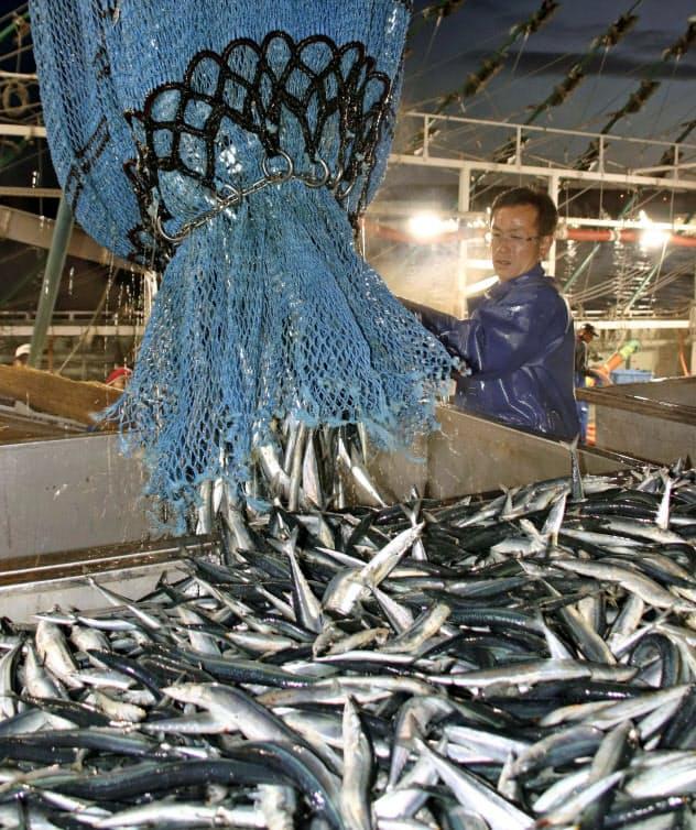 今年のサンマ漁も苦戦が予想される(根室市の花咲港、共同)