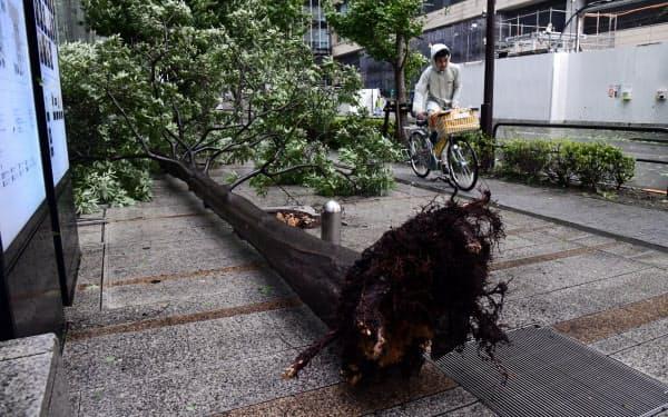 強風で倒れた街路樹(9日午前、東京・大手町)