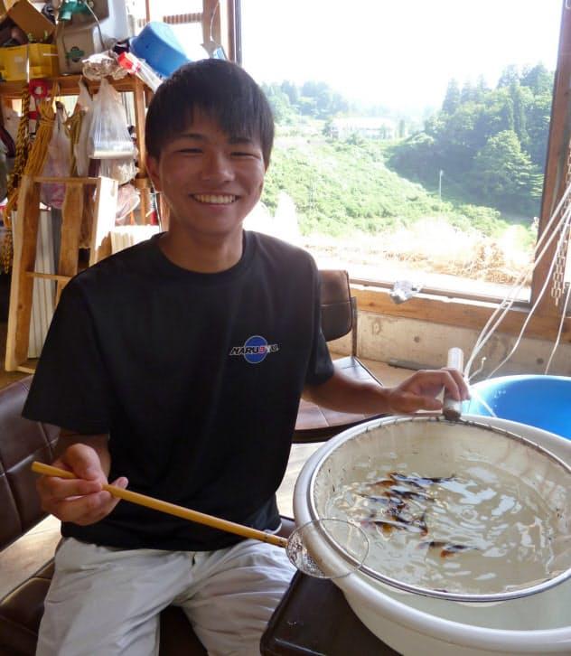 菊池さんは自宅裏庭で30匹近いニシキゴイを飼育している