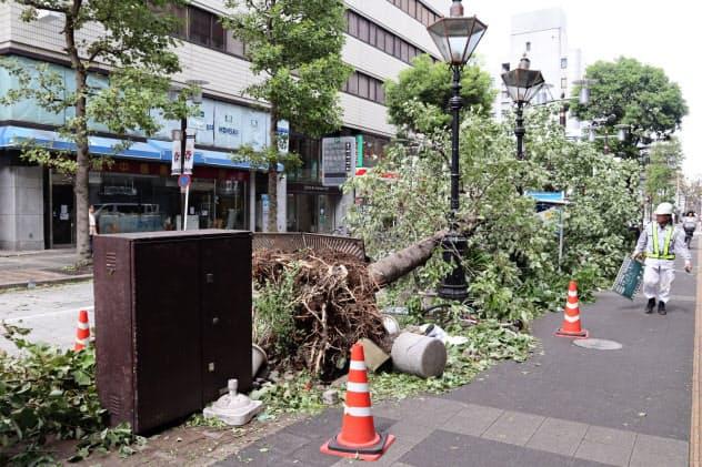 千葉市中心部でも街路樹が倒れる被害が相次いだ(9日午前)
