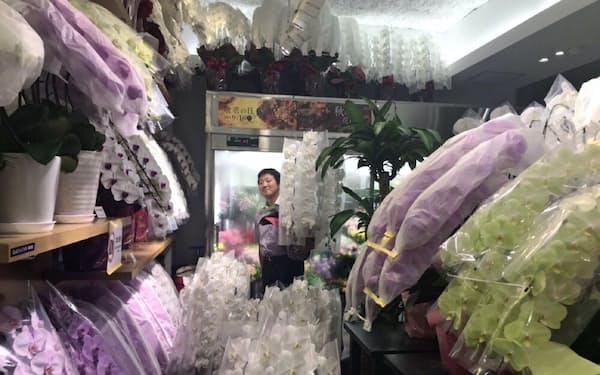 内閣改造を前に大量のコチョウランを用意する花屋さん(都内)