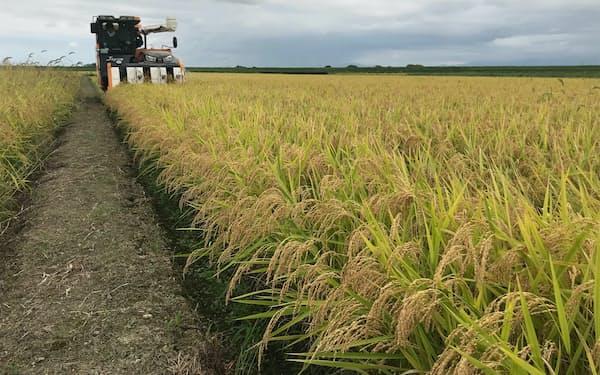 業務米の需要は拡大している(新潟県のこしいぶきの収穫風景)