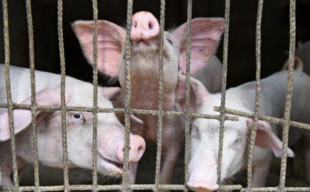 中国では豚肉の価格が7月から2倍近くに跳ね上がっている=ロイター