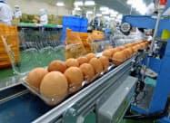 暑さが和らぎ、鶏卵需要は回復しつつある