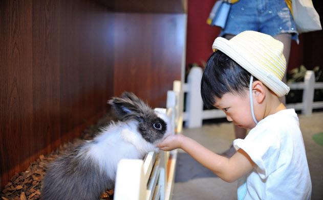 屋内動物園でウサギと触れ合う子供(MR.ZOO 小小動物元提供)