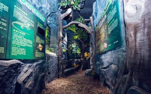 ジャングルを再現した展示スペース(同)