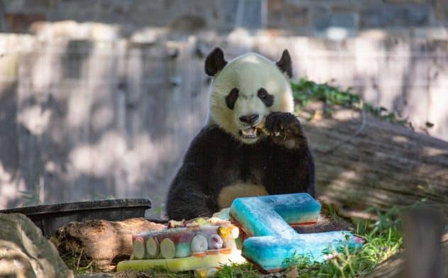 4歳の誕生日を迎えたスミソニアン国立動物園の子パンダ、ベイベイ(8月22日撮影、同動物園提供)
