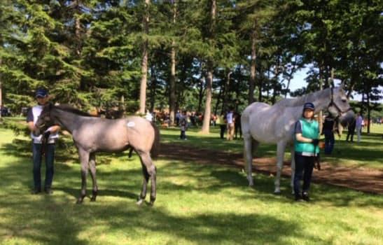 母アゲヒバリ(右)とともに展示に姿を見せた父ロードカナロアの牡馬。2億1000万円で取引された