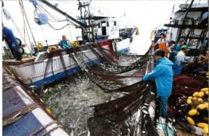 「東京五輪に東京湾の魚を提供したい」と水産資源保護に取り組む動きも(千葉県船橋市)