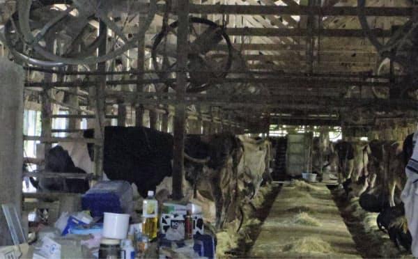 上部に送風機が取り付けられた弁天牧場の牛舎(12日、千葉市若葉区)=共同
