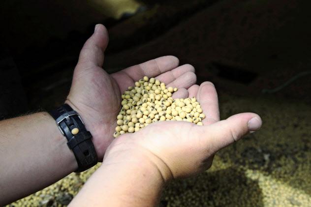 中国の報復関税の影響で、米国の農家では大豆の在庫が積み上がっている=AP