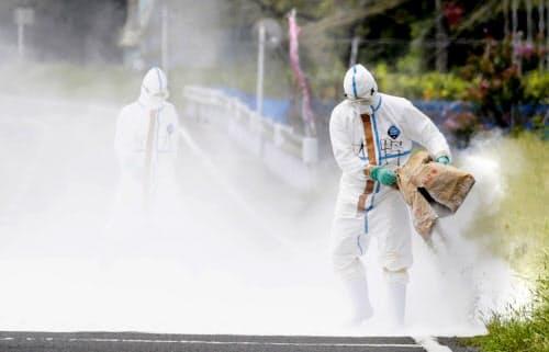 豚コレラの感染が確認された養豚場の近くで、消毒のため通行止めの道路に石灰をまく関係者(14日午前、埼玉県秩父市)=共同
