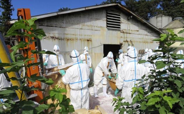 埼玉県は豚コレラの感染ルート特定を急ぐ(14日、埼玉県秩父市)=同県提供・共同