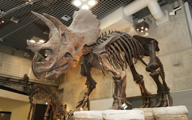トリケラトプスの復元骨格(東京都台東区の国立科学博物館)