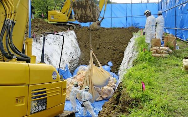 豚コレラに感染した豚が飼育されていた養豚場で行われる殺処分作業=14日午後、埼玉県秩父市(同県提供)