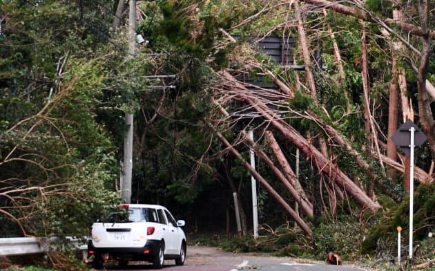 台風15号では倒木による停電が多かった(11日、千葉県君津市)