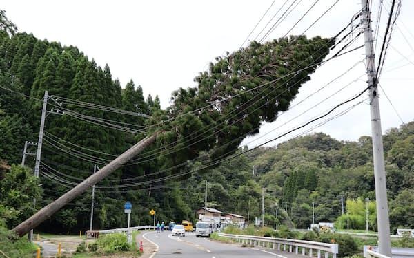 豊かな里山の木々が至るところでなぎ倒された(13日、千葉県君津市)