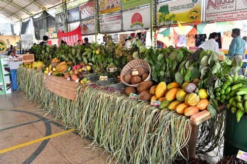 トメアスの日系移民は多種多様な農作物を育てている(ブラジル北部トメアス)