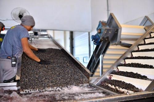 農協では果実をジュースに加工し、付加価値を高めて出荷する(ブラジル北部トメアス)