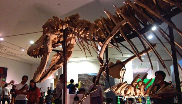 岡山理科大の学生らが組み立てたタルボサウルスの骨格標本は、岡山シティミュージアム(岡山市)で9月上旬まで開かれた「世界大恐竜展」で展示された