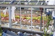 台風でガラスが割れて飛び散ったカーネーション農家の温室(14日、千葉県南房総市)