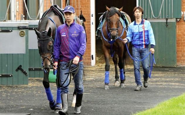 英国のニューマーケットで調整する日本調教馬のフィエールマン(前)とブラストワンピース(平松さとし氏提供)=共同