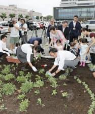 熊本市立熊本市民病院の敷地にフランス菊の苗を植える宮崎さくらさん(手前左)ら(3日午前)=共同