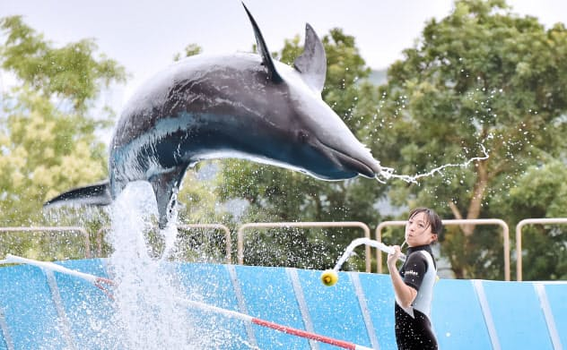 トレーニング用の棒「ターゲット」を使い、イルカに動きを指示する弓削ほたるさん=大岡敦撮影