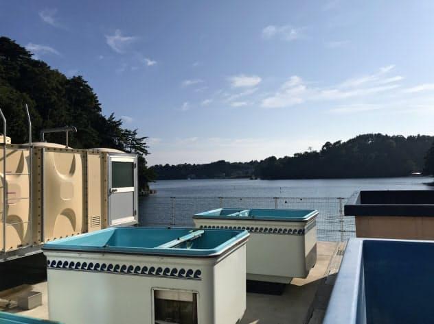 拠点は海に隣接しており、飼育・実験に使う海水や魚を調達する(石川県能登町)