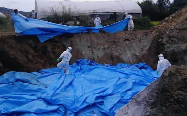豚コレラに感染した豚などを埋却する作業員(9月、長野県高森町)