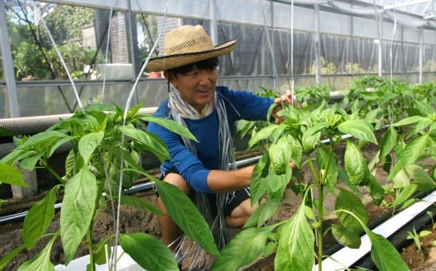 高知市の2段階移住を利用し、農業を学ぶ三木さん(高知県土佐市の農園)