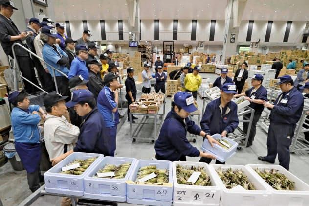開場から1年を迎えた豊洲市場で行われたワサビやマツタケの競り(11日)=共同
