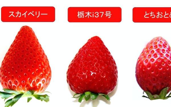 栃木県が開発した3種類のイチゴ(栃木県提供)