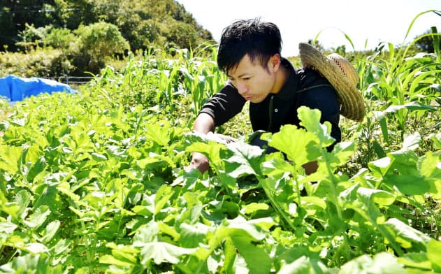 野菜やコメを無肥料・無農薬で育て、家庭やレストランに直接販売する