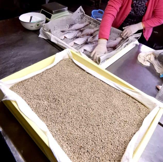滅菌処理した軽石(手前)で魚を挟んで水分を抜くことで、ふっくらした干物に仕上がる=北海道鹿部町のイリエ船橋商店