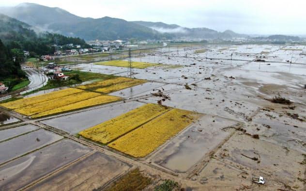 川の氾濫で泥につかった田んぼ。刈り取り前の稲も被害を受けた(19日、宮城県丸森町)