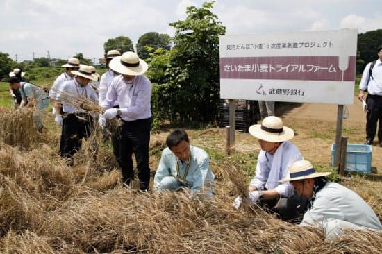小麦の6次産業化を後押しするプロジェクトにも取り組んでいる(さいたま市)